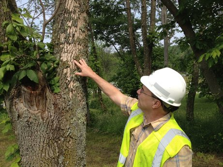 tree-inspection-ct