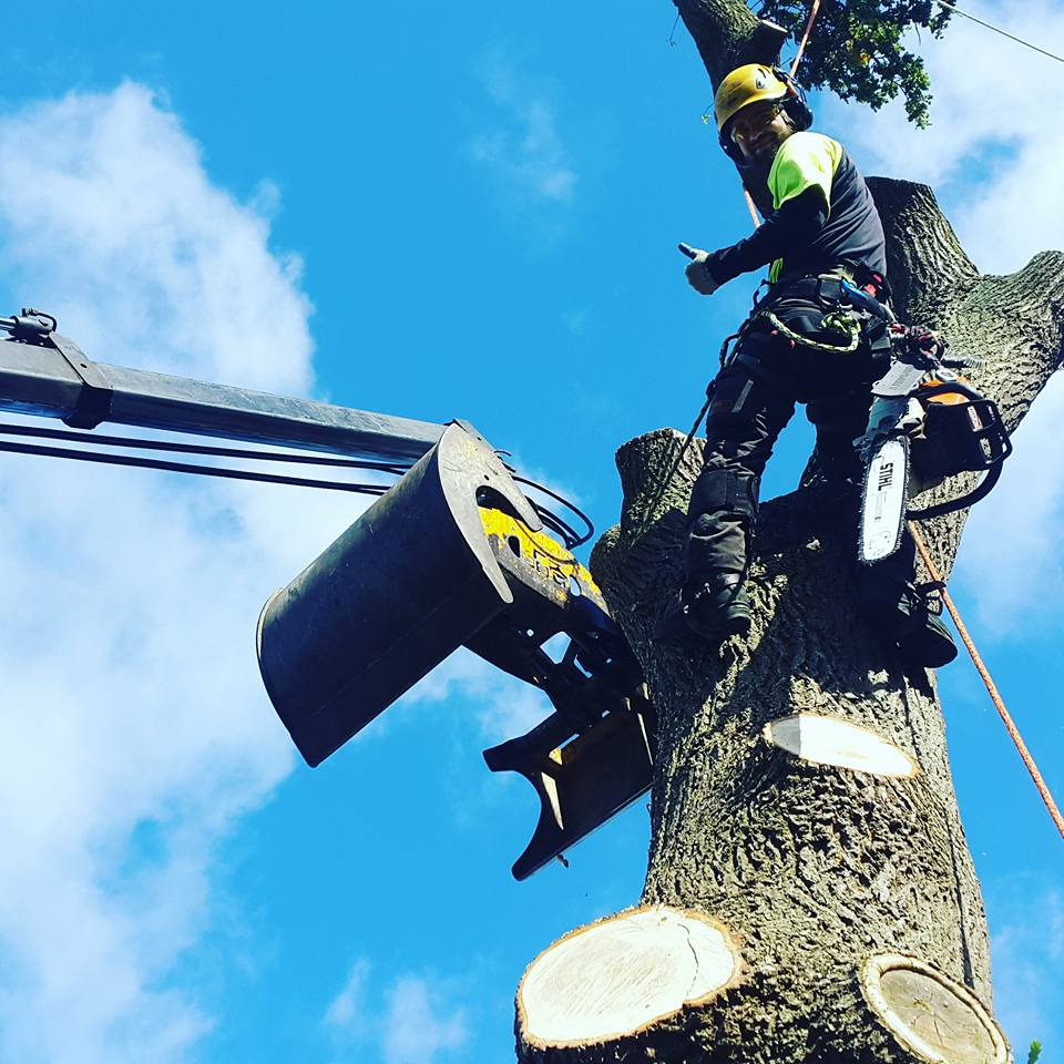 Byens Træpleje Aps - Træfældning og Træbeskæring